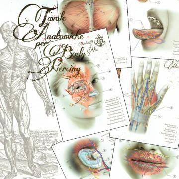 Tables Anatomiques pour le bodypiercing-4532